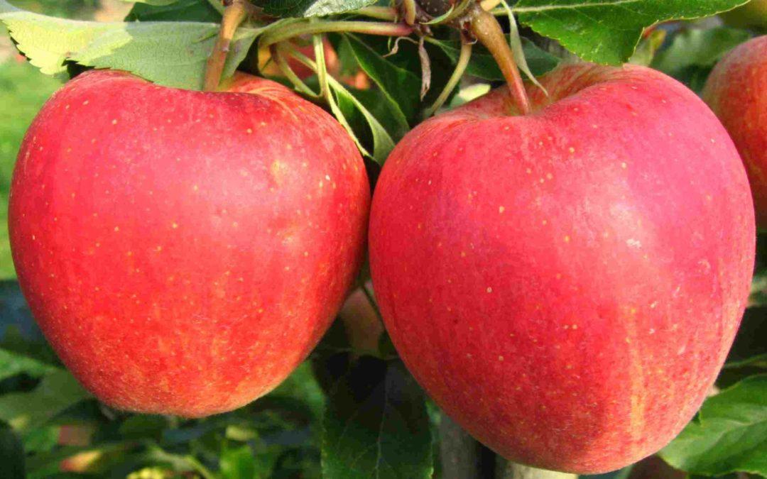 18.8.2020 – Obst-Sommertagung ZOB